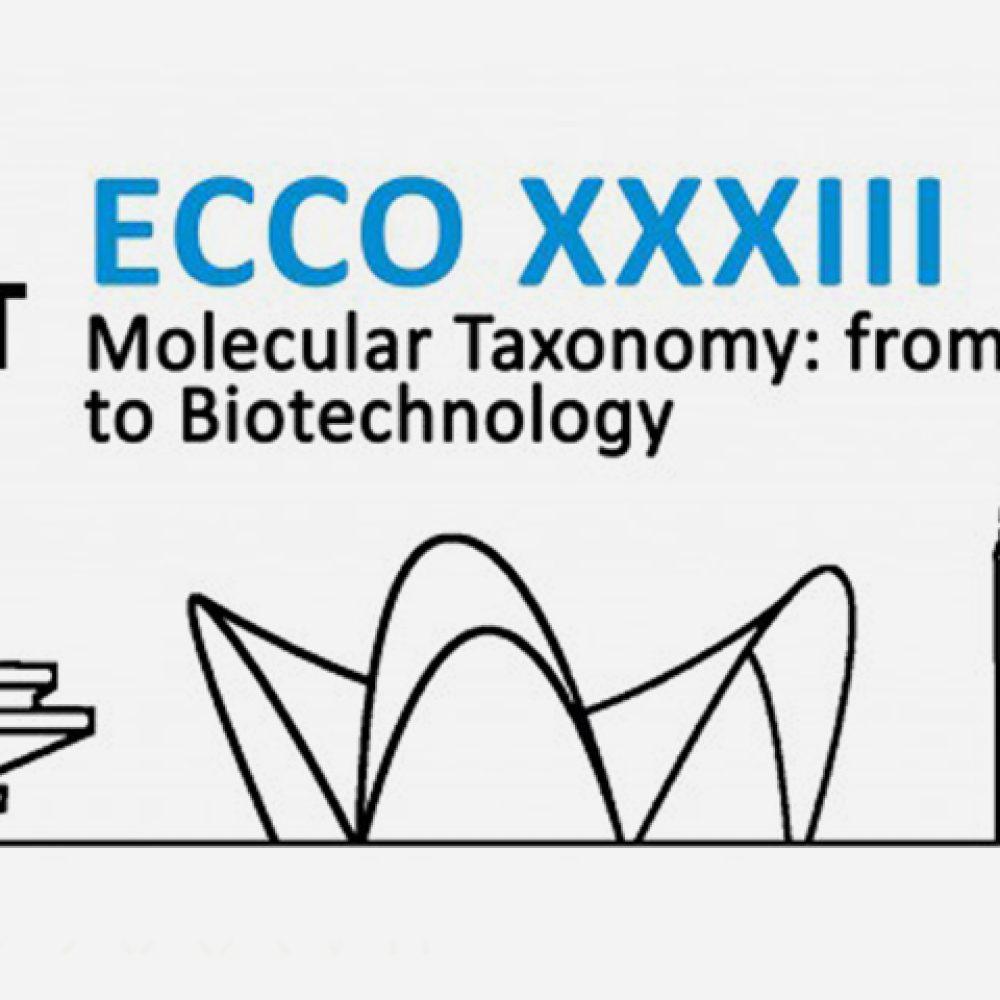 ECCO XXXIII. Valencia, Spain